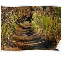 Nature Trails #1 Poster