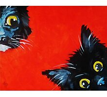 Sneaky Kittens Photographic Print