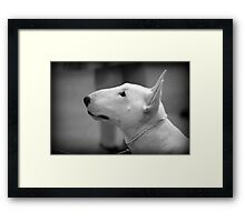 MINIATURE BULL TERRIER Framed Print