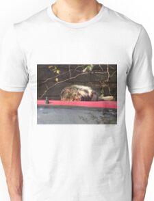 The Curious Cat Unisex T-Shirt