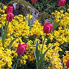 Tulips by George Cousins
