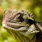 Eastern Water Dragon by Judy Harland