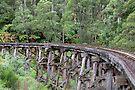 Belgrave Trestle Bridge by mspfoto