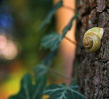 Snail Shell by OlliCrusoe