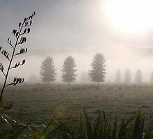 Keri Keri New Zealand Landscape by dunxs