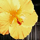 Tropicana Yellow Hibiscus by Sue Cotton