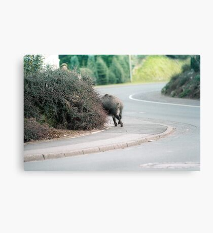Wild Hog Canvas Print