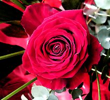 Red Rose Number One by Yvonne Carsley