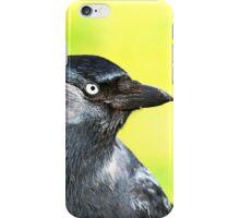 Jackdaw iPhone Case/Skin