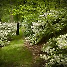 Amidst the White of Spring, a Dark Lady by Marilyn Cornwell