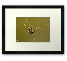 Spiny Orb Weaver Framed Print