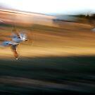 Race ya home ! by brilightning