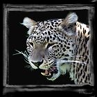 Leopard by ©FoxfireGallery / FloorOne Photography