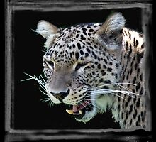 Leopard by ©FoxfireGallery / FloorOne Photography