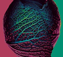 Cabbage by Tony  Hardy