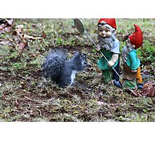 One more step and the Squirrel gets it! Photographic Print