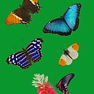 Butterfly Collection by Robert Abraham