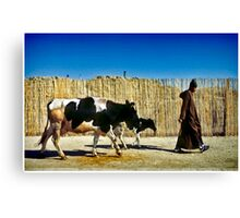 One Man Leading One and a Half Cows Canvas Print