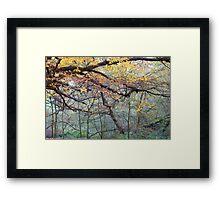 Misty Autumn Wood Framed Print