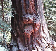 Wooden Faces by Bellavista2