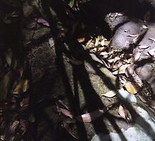 Stones, Leaves, Shadows - Bola Creek by Joe Glaysher