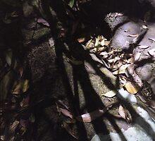 Stones, Leaves, Shadows - Bola Creek by Joe Glaysher