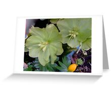 Hellebore and Aconite Greeting Card