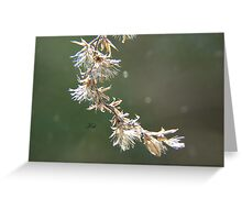 Winter's Touch Greeting Card