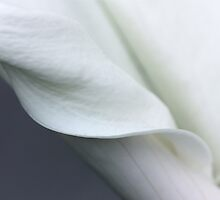 Calla Curves by Jan  Wall