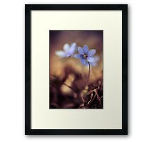 Impression with liverworts Framed Print
