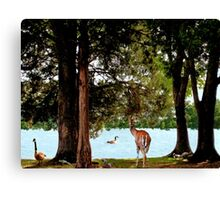 There you are... we've been waiting for you Canvas Print