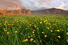Wild Flowers, Fox Glacier Valley, South Island, New Zealand by Michael Boniwell