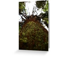 Cool Tempered Rainforest, Victoria  Greeting Card