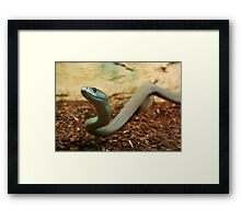 Black mamba Framed Print