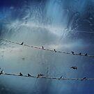 on a wire by Voytek Swiderski