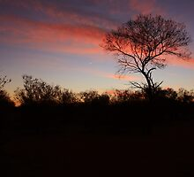 Bush, Northern Territory by mapartstudio