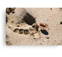 Footprint, Western Australia Canvas Print