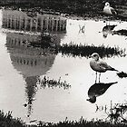 Birds in the Capitol's Pond by alanbrito