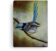 """Blue Wren  """"Perfect View""""  SOLD Canvas Print"""