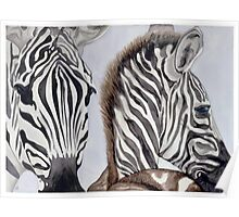 Zebras Mother and Child Poster