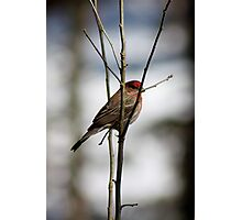 Pale Shelter Photographic Print