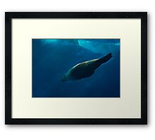 Seal - 50 Shades of Blue Framed Print