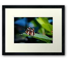 Butterflies on a leaf A Framed Print