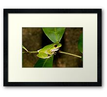 New species! well, not really... Framed Print