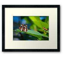 Butterflies on a leaf B Framed Print