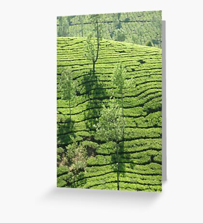 Tea Estate Greeting Card
