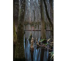 A Touch of Color – Congaree National Park, South Carolina Photographic Print