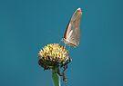 Butterfly 2 by David Clarke