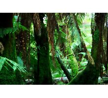 Camp Firefly Photographic Print