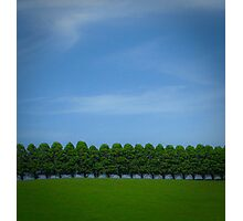 sentinels Photographic Print